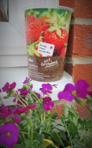 grow in a pot strawberries
