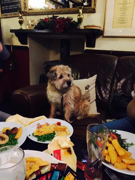 dog sat on sofa in pub